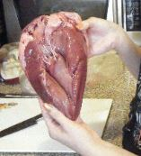 heart close up