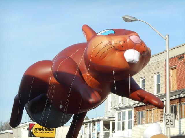 beaver balloon